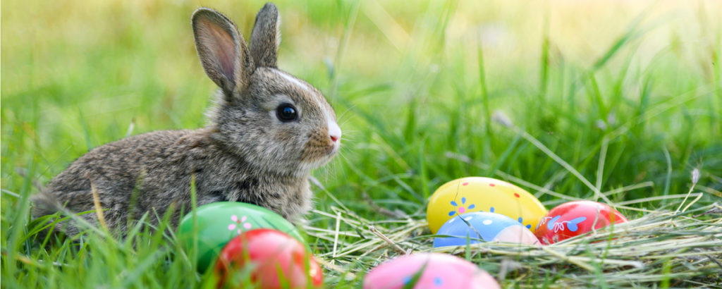 Easter Bunny is Bringing Games 2019!